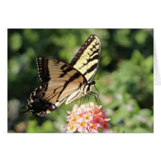 Eastern tiger swallowtail card