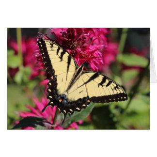 Eastern Tiger Swallowtail on bee balm Card