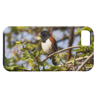 Eastern Towhee iPhone 5 Covers