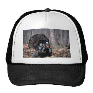Eastern wild turkey strutting in woods hat