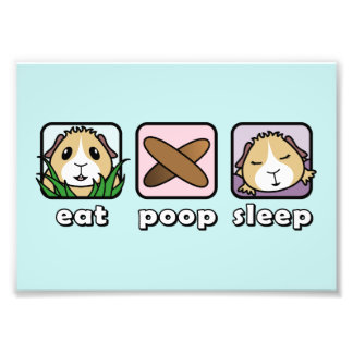 Eat Poop Sleep Guinea Pig Print (Frames Available)
