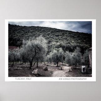 Ebbio Tuscany, Italy Olive Trees Poster