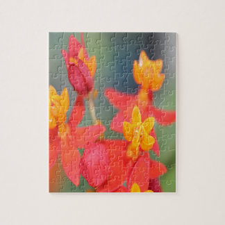 Echeveria Succulent Red and Yellow Flower Jigsaw Puzzle