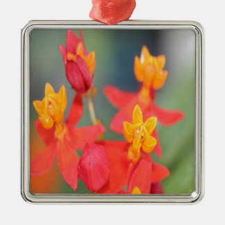 Echeveria Succulent Red and Yellow Flower Metal Ornament