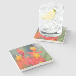 Echeveria Succulent Red and Yellow Flower Stone Coaster