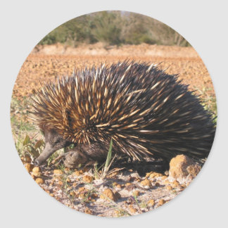 Echidna Finding Food On The Soil Round Sticker