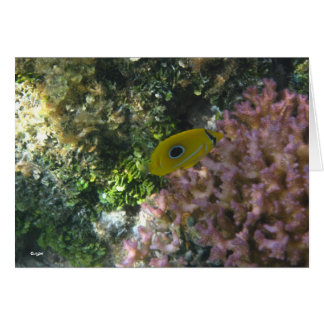 Eclipse Butterfly Fish Swimming By Coral Note Card