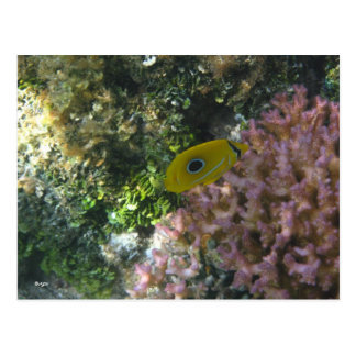 Eclipse Butterfly Fish Swimming By Coral Postcard