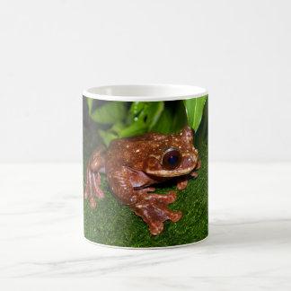 Ecnomiohyla Rabborum Rabbs Fringe Limbed Tree Frog Basic White Mug