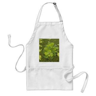 Eco green apron