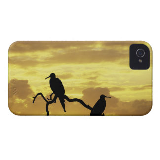 Ecuador, Galapagos Islands. Silhouette of iPhone 4 Case