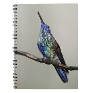 Ecuador, Tandayapa Bird Lodge. Sparkling Spiral Notebook