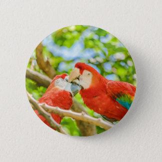 Ecuadorian Parrots at Zoo, Guayaquil, Ecuador 6 Cm Round Badge
