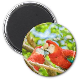 Ecuadorian Parrots at Zoo, Guayaquil, Ecuador 6 Cm Round Magnet