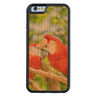 Ecuadorian Parrots at Zoo, Guayaquil, Ecuador Carved Cherry iPhone 6 Bumper Case