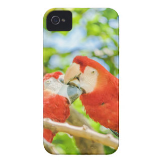 Ecuadorian Parrots at Zoo, Guayaquil, Ecuador Case-Mate iPhone 4 Cases