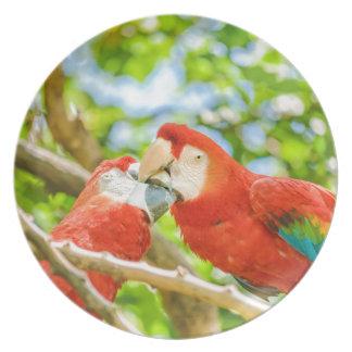 Ecuadorian Parrots at Zoo, Guayaquil, Ecuador Plate