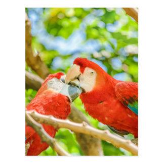 Ecuadorian Parrots at Zoo, Guayaquil, Ecuador Postcard