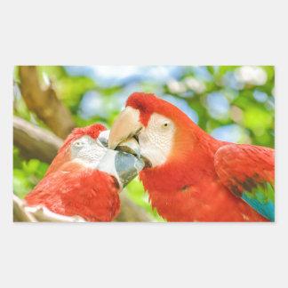 Ecuadorian Parrots at Zoo, Guayaquil, Ecuador Rectangular Sticker