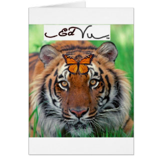 Ed Vu Tiger Monarch butterfly Cards