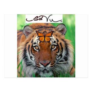 Ed Vu Tiger Monarch butterfly Postcard