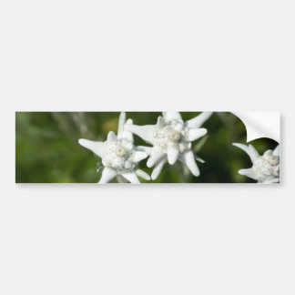 Edelweiss Alpine Flower Bumper Sticker