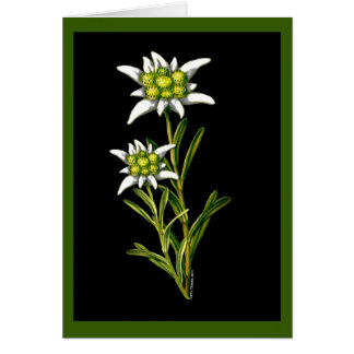 Edelweiss Custom Greeting Card