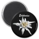 Edelweiss Flower Bloom