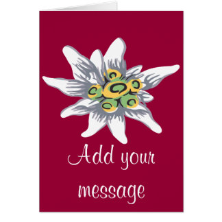 Edelweiss flower card