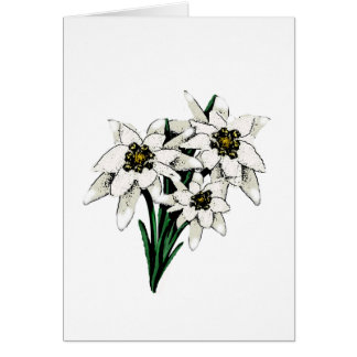 Edelweiss Flowers Card