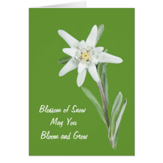 Edelweiss Greeting Card