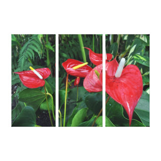 Eden Project Botanical Red Stretched Canvas Prints