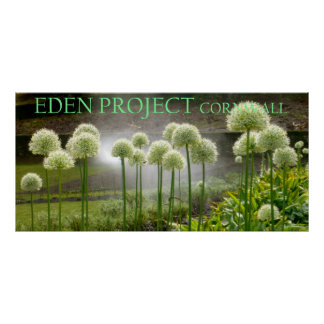 Eden Project, Cornwall Poster