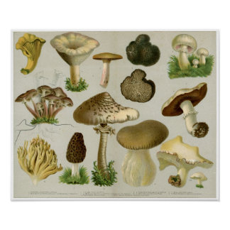 Edible Fungi - Mushrooms and Toadstools Poster