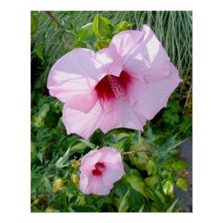 Edible Giant Hibiscus Flower