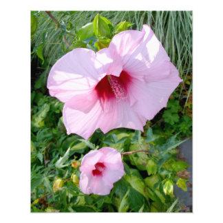 Edible Giant Hibiscus Flower Photo Art