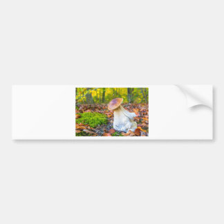 Edible porcini mushroom on forest floor in fall bumper sticker