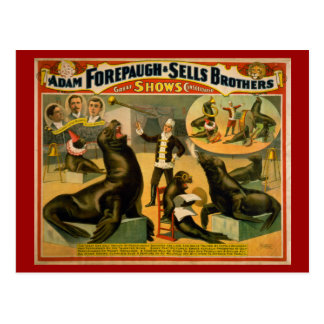 Educated Sea Lions and Seals Circus Poster Postcard