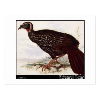 Edward Lear's Eyebrowed Guan Postcard