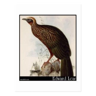 Edward Lear's Pileated Guan Postcard