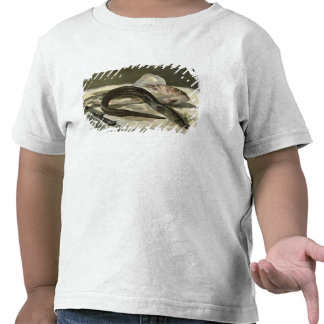 Eel and Red Mullet, 1864 Shirt