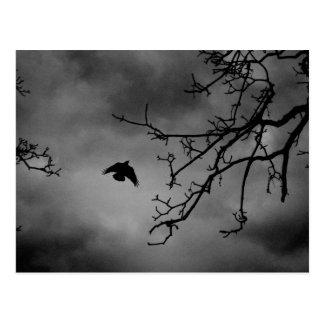 Eerie Bird in Flight Postcard