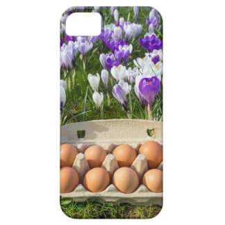 Egg box with chicken eggs in crocuses barely there iPhone 5 case