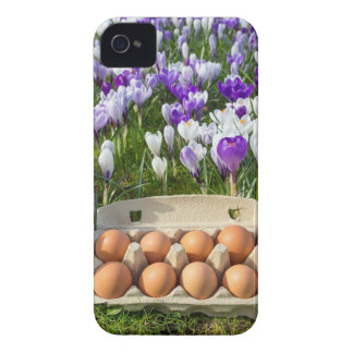 Egg box with chicken eggs in crocuses iPhone 4 cover