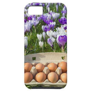 Egg box with chicken eggs in crocuses iPhone 5 cases