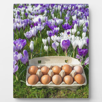 Egg box with chicken eggs in crocuses plaque
