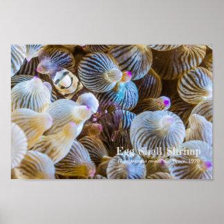 Egg Shell Shrimp Poster