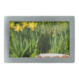 Eggs in box on grass with yellow daffodils belt buckles