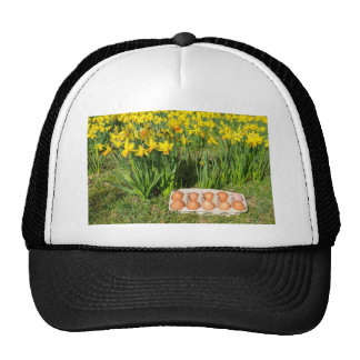 Eggs in box on grass with yellow daffodils cap