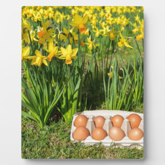 Eggs in box on grass with yellow daffodils plaque